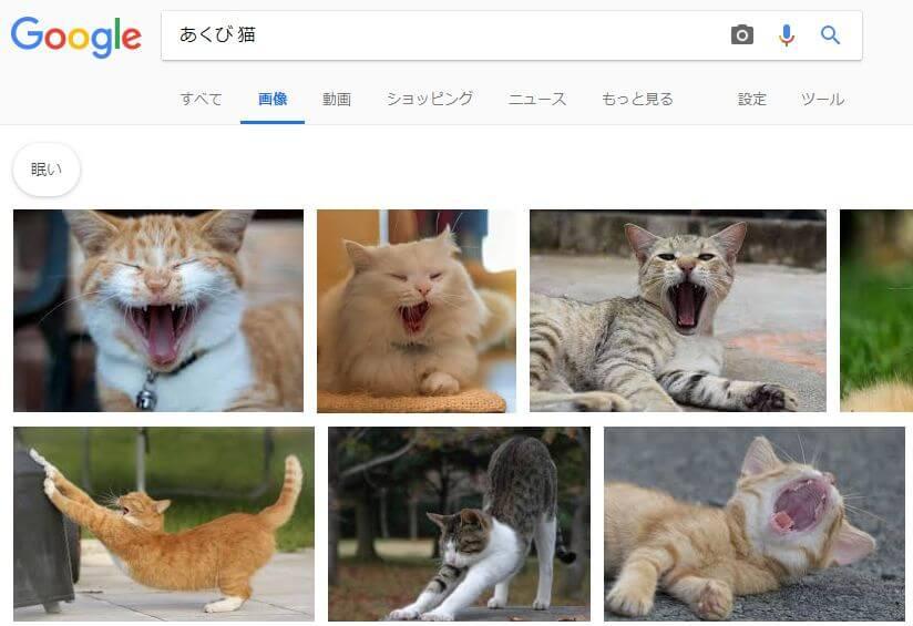 「あくび 猫」で検索した検索結果